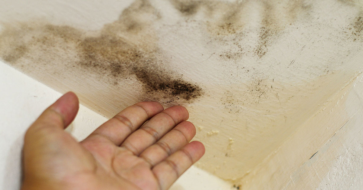 mould damage